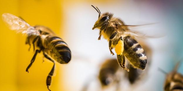 Weltweit sterben Bienen. Und Bayer will, dass es so bleibt.