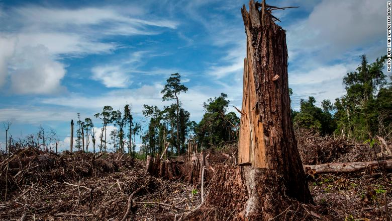 The EU could ban palm oil imports for biofuel in a few days